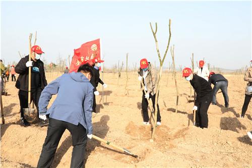 开展义务植树活动